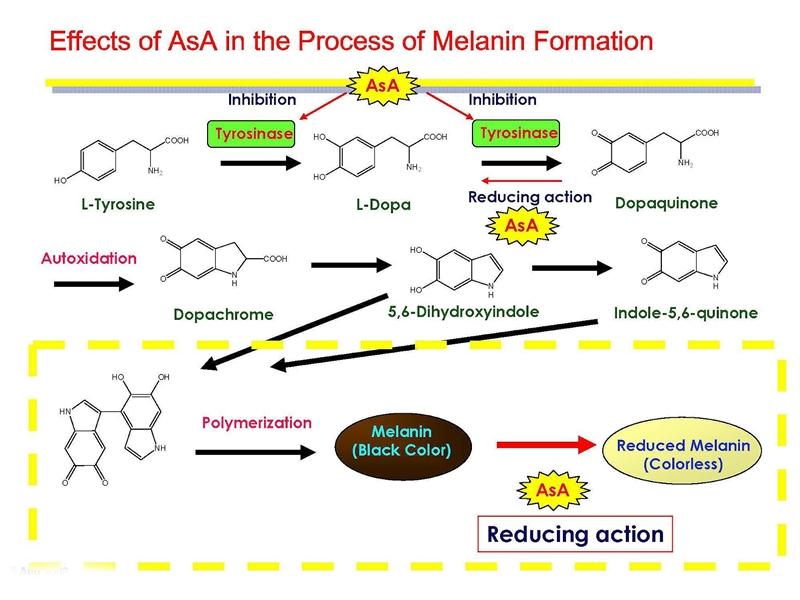 collagen sythesis