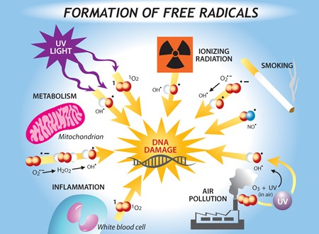 free radicals in skin care