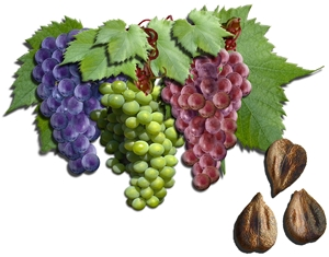 Grape Seed Proanthocyanidins Skin Care