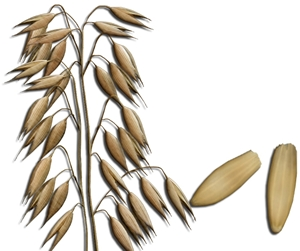 oat beta glucan in skin care