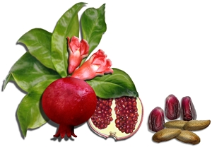 Pomegranate (40% Ellagic) skin care