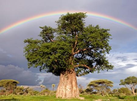 Baobab oil skin care