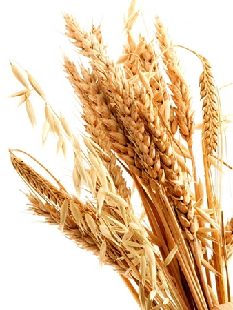 wheat germ oil in skin care